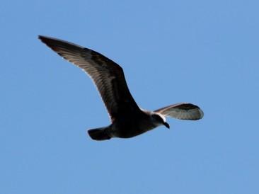 Waterfowl 1