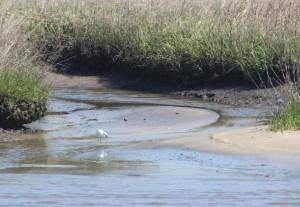 Waterfowl 13
