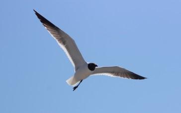 Waterfowl 17