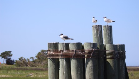 Waterfowl 18