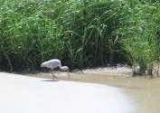 Waterfowl 19