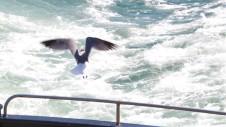 Waterfowl 2