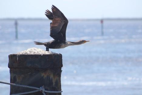 duck-taking-flight