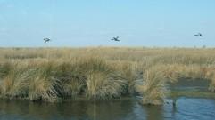 Waterfowl 22