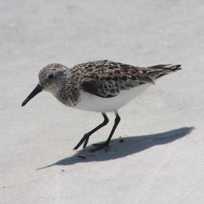 Waterfowl 23