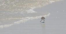 Waterfowl 24