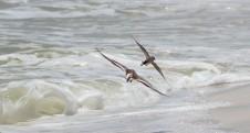 Waterfowl 26