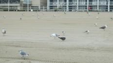 Waterfowl 27