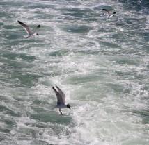 Waterfowl 3