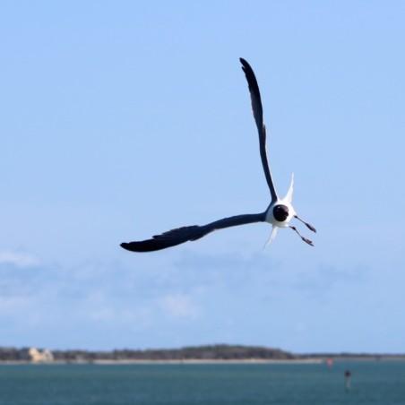 Waterfowl 4