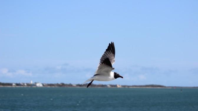 Waterfowl 5
