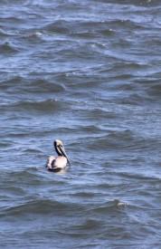 Waterfowl 6