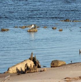 Waterfowl 7