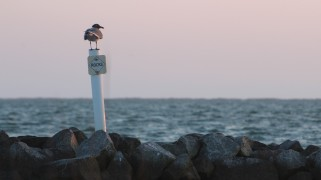 Waterfowl 8
