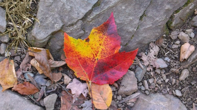 red-leaf-autumn-fall