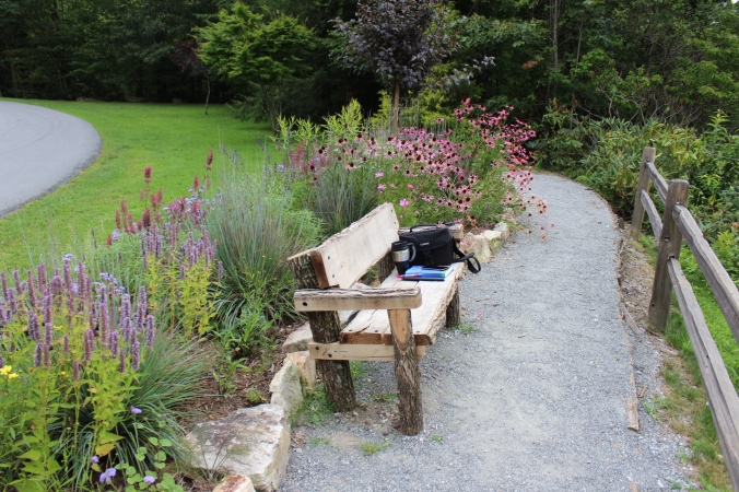 bench-and-wildflowers
