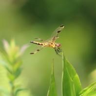 Bugs (3)