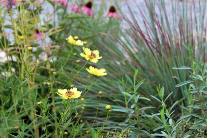 Flowers (14)