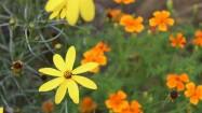 Flowers (19)
