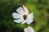 Flowers (27)