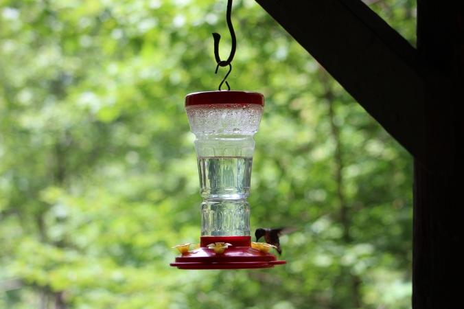 Hummingbird (29)
