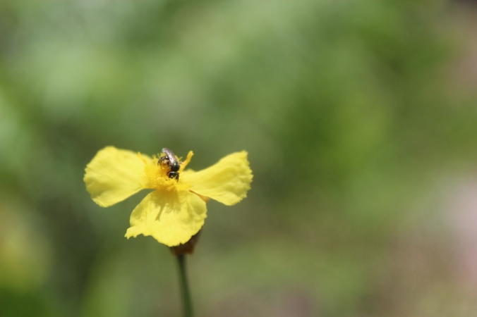 WF Yellow flower (4)