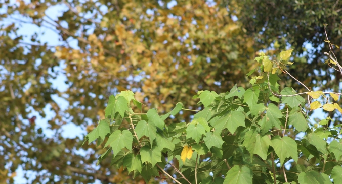 Changing Leaves (2)