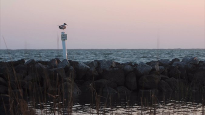 seagull-at-rest-2
