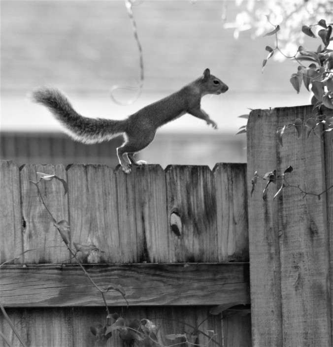 Squirrel hopping 2