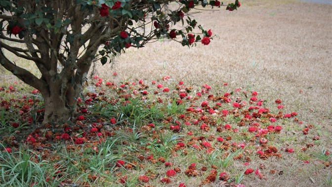 Flowers, red (4)