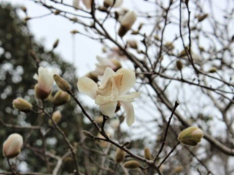 Flowers, white (1)