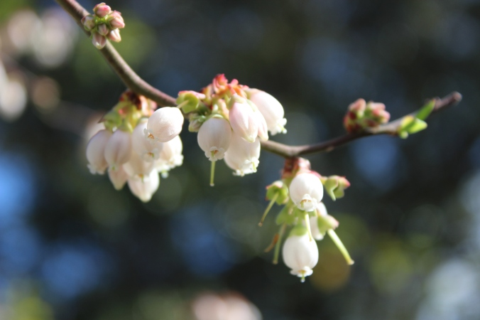 tiny white bell-shaped flowers