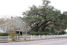 Huge Tree (1)