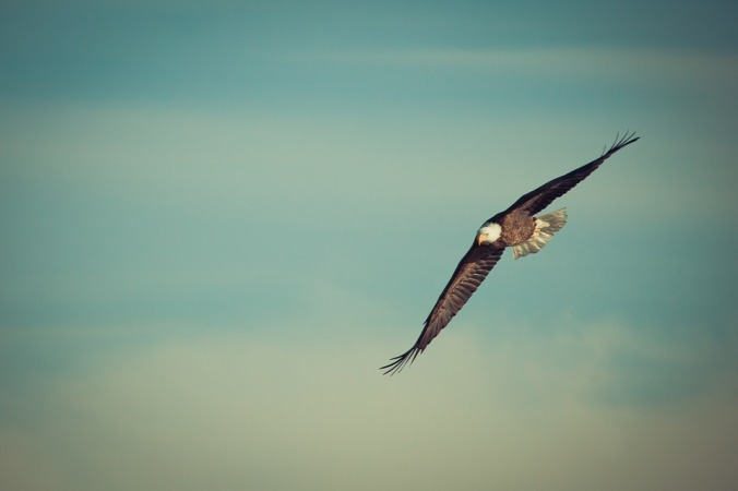 eagle soaring in the sky
