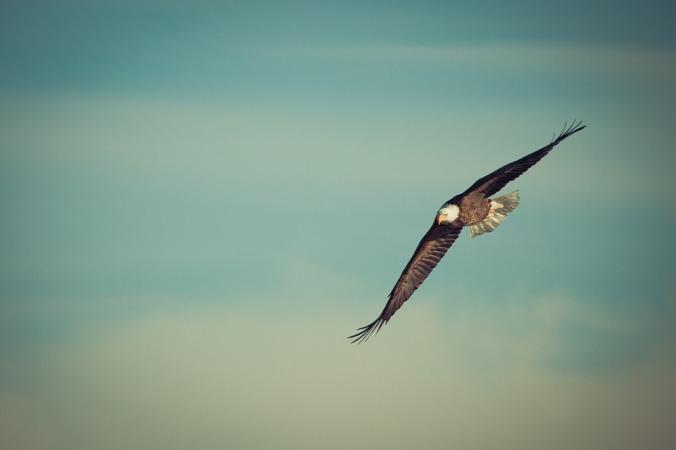 eagle soaring in the sky