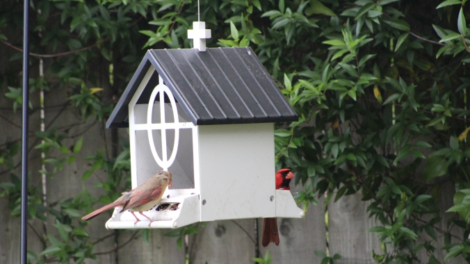 male and female cardinals at a bird feeder